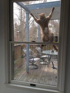 El vestido de ventana | Las 100 fotos más importantes de los gatos de todos los tiempos