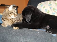 #Freya #Dog #Tom #Cat #Puppys #LoveAnimals #MyMonsters #MyPets #CanaryIsland #Play