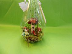 Terrarium with fairy and mushroom home by KuBuCreations on Etsy, $32.00