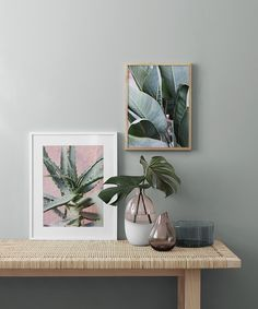 Plant on pink two  Poster in the group Prints / Sizes / 50x70cm | 20x28 at Desenio AB (2251)