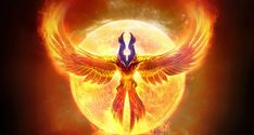 Pheonix image:  I like the vibrancy and the symmetry.