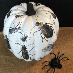 Black & White & Buggy All Over...My Découpage Insect Pumpkin