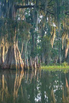 Cypress Knees - Lafayette Louisiana