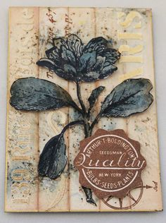 PaperArtsy: NEW from PaperArtsy {Eclectica³ Scrapcosy} February 2017