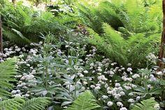 Varjoisan puutarhan kasvit - Suomela - Jotta asuminen olisi mukavampaa