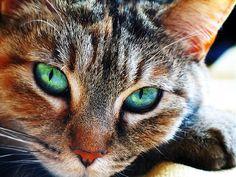 http://www.freewebs.com/robinsong95/brown-cat.jpg