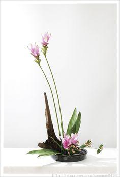선(禪) 꽃꽂이 Ikebana Flower Arrangement, Ikebana Arrangements, Flower Vases, Cactus Flower, Modern Floral Arrangements, Beautiful Flower Arrangements, Beautiful Flowers, Exotic Flowers, Fresh Flowers