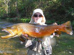 Nice brown trout.                                                                                                                                                                                 Mehr