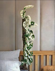 Inside Plants, Room With Plants, Cool Plants, House Plants, Types Of Houseplants, Household Plants, Decoration Plante, Plants Are Friends, Plant Aesthetic