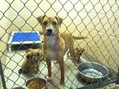 PLEASE HELP SAVE MIA AND HER PUPS! | Pet Expenses - YouCaring.com