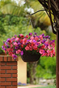 'Easy Wave' Petunia - South Beach: This trailing type of petunia is the one we use in our premier hanging baskets.  Flowers range in color from pink to red to purple.  Fantastic flowers for making a statement.