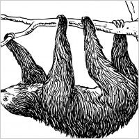 I want a sloth tattoo. I know it sounds stupid, but theres meaning behind it.