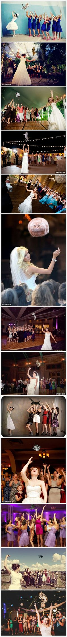 """""""Brides Throwing Cats"""", because bouquets are so yesterday. Thank you to the person that made this."""