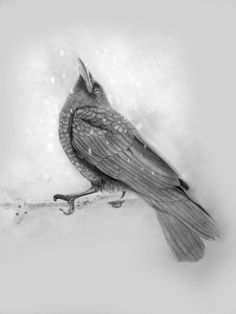 Graphite Pencil Drawing 'The First Snow of Winter' this young raven is wondering what is happening