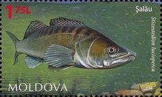 Moldova Postage Stamps (Commemorative) 2014 № 885   Zander (Stizostedion lucioperca)   Issue: Fauna of Moldova