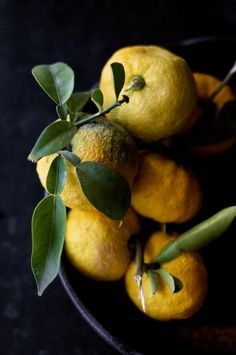 Growing Yuzu & Other Citrus in the North - Or How to Have an Orangerie Even if You Aren't a Member of a Royal Family
