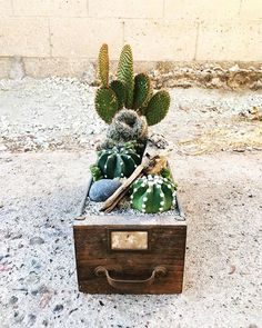 Upcycles for the soul via @botanical_project ⠀ Link in bio for everything cacti + succulents #succulents #succulent #succulove #succulentgarden #succulentsofinstagram #cacti #cactus #plantlady
