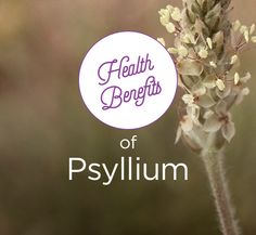 Most commonly known as a laxative, read on about the many other benefits of psyllium from your heart to your pancreas!