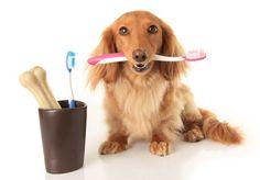 higiene bucal animais cães gatos veterinário escovacao-dentes-cachorro