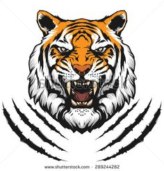 Tiger Face Stock Vectors & Vector Clip Art | Shutterstock