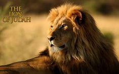 Lion Of Judah HD Wallpaper