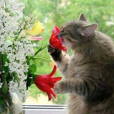 Ksip kvepia...
