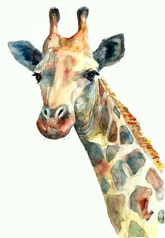 Lovely giraffe drawing using watercolor style. I can't draw such lively giraffe illustration even if I want to 😁 Giraffe Drawing, Giraffe Painting, Giraffe Art, Giraffe Nursery, Nursery Art, Watercolor Paintings Of Animals, Animal Paintings, Watercolor Illustration, Watercolor Art