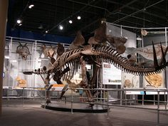 Stegosaurus skeleton by midwinter, via Flickr