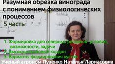 """5 фильм """"Разумная обрезка винограда"""" Формировка для севера"""