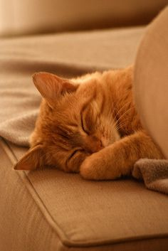 spirou sleeping by Alexandre Dulaunoy, via Flickr