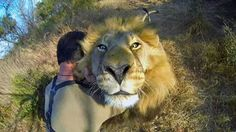"""Kevin Richardson, """"The Lion Whisperer.""""  Or Crazy Kevin....your call"""
