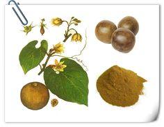 #Luo Han Guo Extract 1, Latin Name:  #Siraitia grosvenori   2, Part used:  Fruit 3, Active ingredients: #Mogrosides ; #Mogroside V  (Brown powder)  4, #Specification:  Mogrosides30-80%;   Mogroside V 20%-65% 5, #Certificates:  #ISO9001 / #Halal / #Kosher / #HACCP http://apitechina.com/