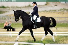 Hanoverian gelding Esprit Noir. Hannover is probably the most well-known and most succesfull of German studbooks. Hanoverians are found all around the world, they are used for competing in the highest levels and also for breeding other warmbloods. The only acceptable colors are bay, chestnut, black and gray.