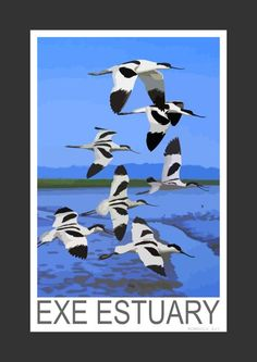 Avocets on the Exe Estuary (Art Print)