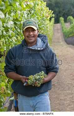 find the perfect united farm workers mexican stock photo