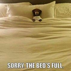 Humans must ask permission to sleep in the bed!