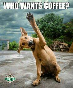 3 Creative and Modern Tips: Organic Coffee Branding coffee addict god.Coffee Beans Background cup of coffee tattoo.How To Make Coffee Painting. Coffee Is Life, I Love Coffee, Coffee Art, My Coffee, Coffee Beans, Coffee Drinks, Coffee Poster, Coffee Shop, Fresh Coffee