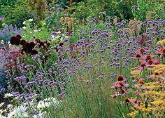 Po rostlinách do vlhčího stínu z minulého čísla obraťme pozornost k rostlinám milujícím slunce a současně nenáročným na závlahu.