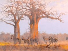 Zebra Art Print African Twilight small by Kim by KDGartprints Wildlife Paintings, Wildlife Art, Animal Paintings, Zebra Drawing, African Tree, Zebra Art, Nature Animals, Wild Animals, African Animals