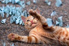 Russia, giocando con il gattino in un paradiso di farfalle blu. Mao!
