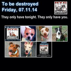 TO BE DESTROYED. 7/11/14 NYC ACC. Just 5 dogs tonight.  Let's make this a NOT FATAL FRIDAY!!!  We can do this! You may be their only hope !