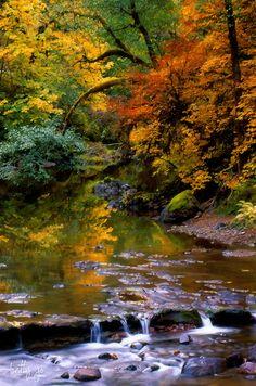 ~~coat of many colors | autumn somewhere near Sweet Home, Oregon | by Betty Jo~~