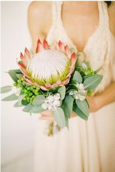 King Protea Bouquet with silver eucalyptus and hypericum. Lovely for the bridesmaids.
