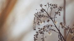 Cinemagraphs / Animated photography - Nature Motion 2 on Behance Film Aesthetic, Blue Aesthetic, Aesthetic Photo, Aesthetic Pictures, Gifs, Picnic At Hanging Rock, Phone Screen Wallpaper, Beautiful Bouquet Of Flowers, Nature Gif