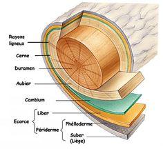 Le matériau bois