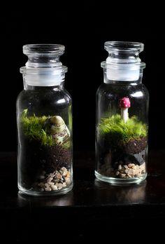 Snail shell and Mushroom Tiny Terrariums