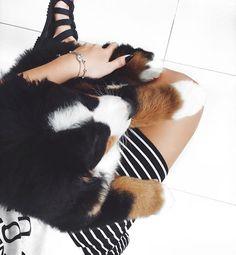 puppy, filhote, bernesse, berne mountain dog , dog, cão, cachorro, Black and White, preto e branco , fashion, moda, listras, stripes