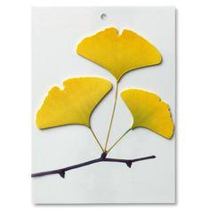 Notizblätter Leaf-It! - Magazin