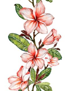 Illustration about Plumeria flower on a twig. Isolated on white background. Illustration of flora, isolated, painted - 108586119 Pattern Illustration, Botanical Illustration, Watercolor Illustration, Watercolor Background, Watercolor Flowers, Watercolor Paintings, Original Paintings, Vine Drawing, Plant Drawing