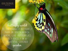Cape Winelands   Butterfly World